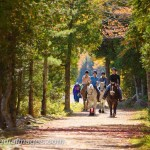 Horses at Bubble Pond Carriage Road. Acadia National Park