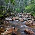 Spruce trees lean over a boulder filled brook.  Acadia National Park