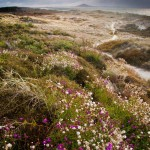 The Beautiful Shore of Northland, New Zealand. Trail through the dunes