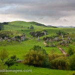 Dairy Country, Central North Island, New Zealand