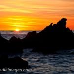 Seal Silhouette at Cape Palliser