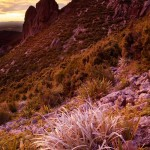 Warm Glow of sunrise light the alpine plants of New Zealand's Mount Somers.