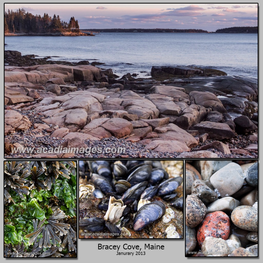 A collection of images from an evening at Bracey Cove